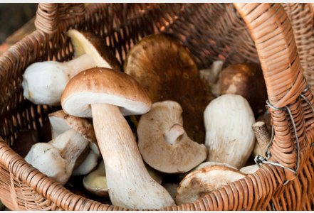 Champignons-on-reste-prudent-pour-eviter-l-intoxication_exact441x300